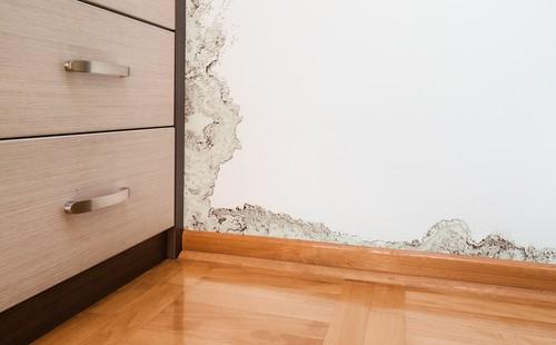 כמה זמן לוקח לטפל בעובש בקירות